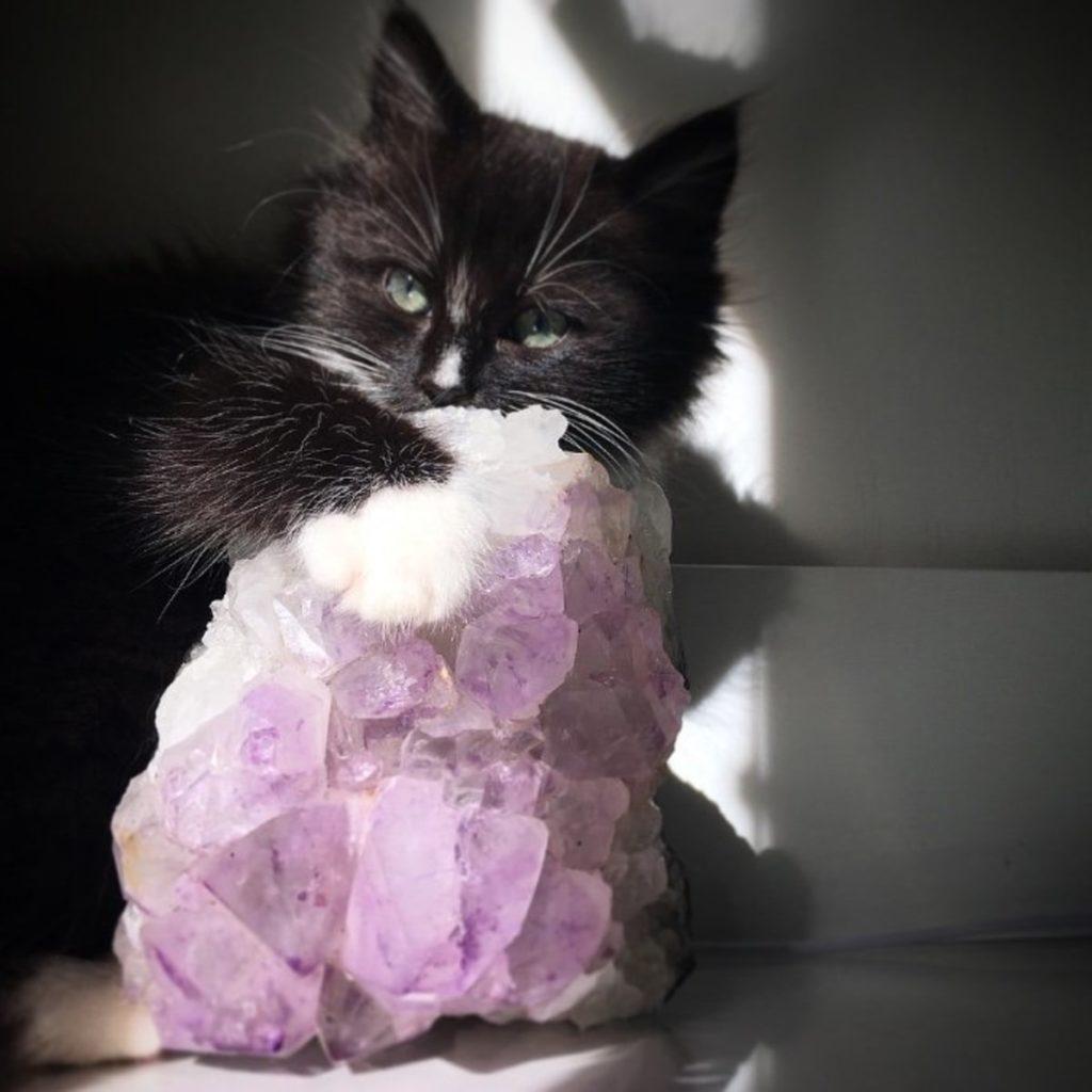 Cristalloterapia gatto